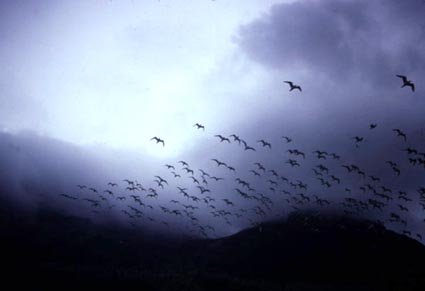 flock 2.jpg