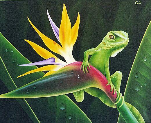 iguana-web.jpg
