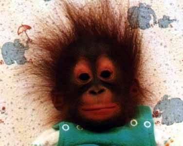 scimmia3.jpg