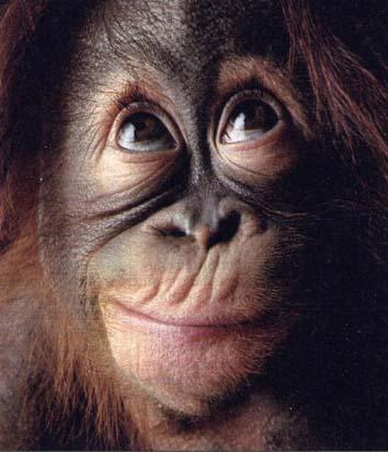 scimmia5.jpg