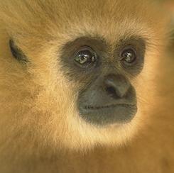 scimmia5.png