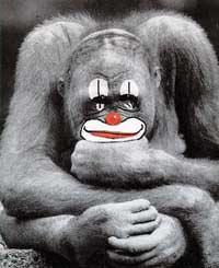 scimmia6.jpg