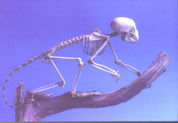scimmia9.jpg