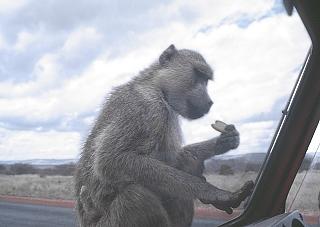Le scimmie… (73)