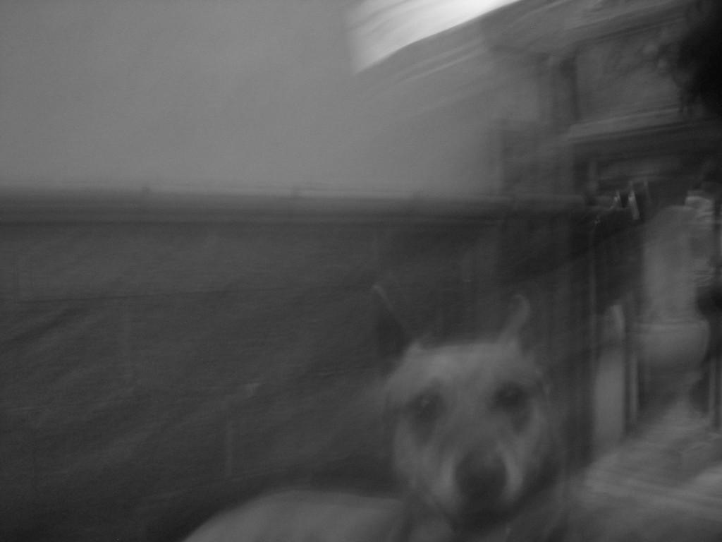 cane de pietro