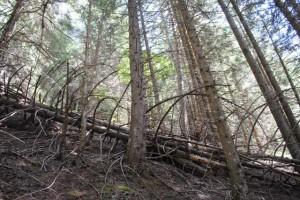 alberi caduti_2014_07_14-18 198