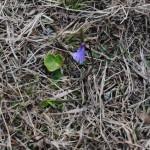 fiore azzurro_2014_07_14-18 083