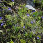 fiori azzurri_14_07_14-18 (124)