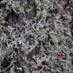 licheni_14_08_11 (55)