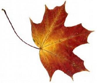 foglie-di-autunno