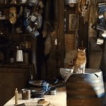 gatto002