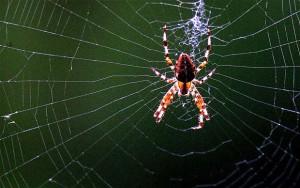 Tutti i ragni 5 – Ragni sulla tela