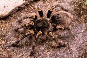 Tutti i ragni 6 – Ragni che attaccano