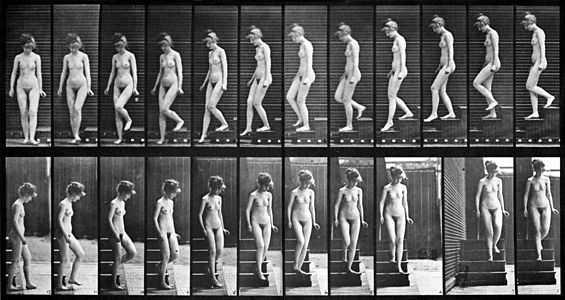 Female_nude_motion_study_by_Eadweard_Muybridge_(2)