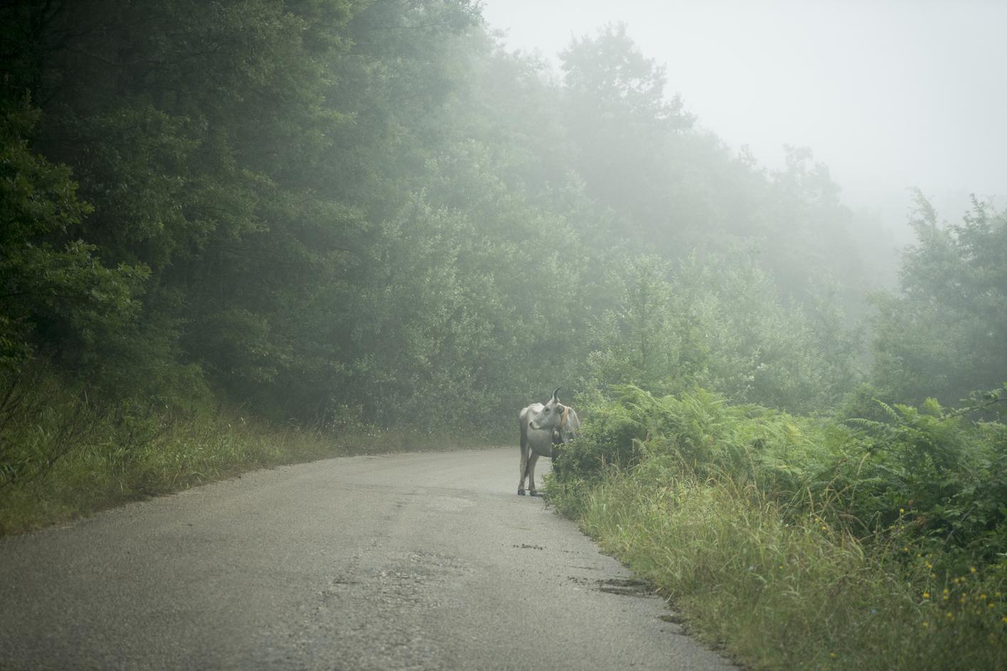 Casa Di Campagna Traduzione Francese : Stiamo scomparendo u2013 viaggio nellitalia in minoranza u2013 nazione indiana